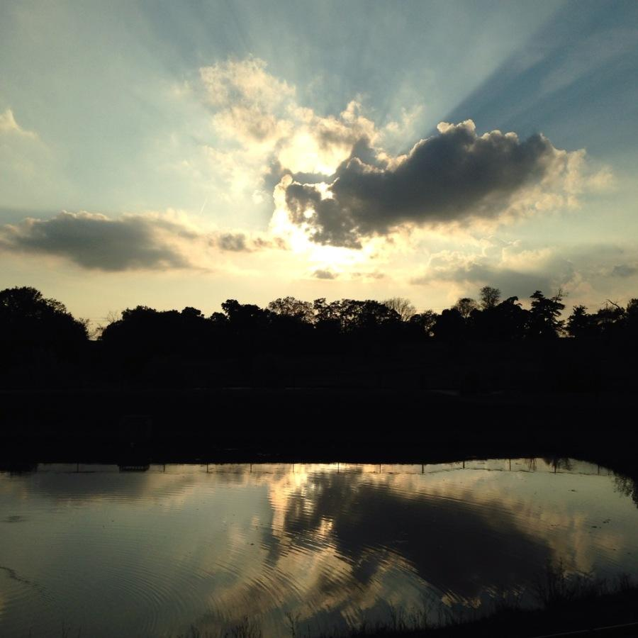 Sunlight shining through cloud cover at dusk in the Urbana Park. The trees provide a barrier between the sky and the water of the pond, which mirrors the clouds.