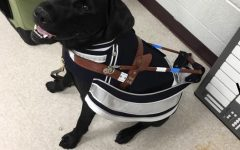 Nemo's Journey: From Puppy to Guide Dog